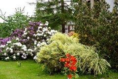 Garten-Sommer